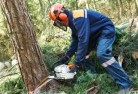 Alton Downs Tree cutting services 21
